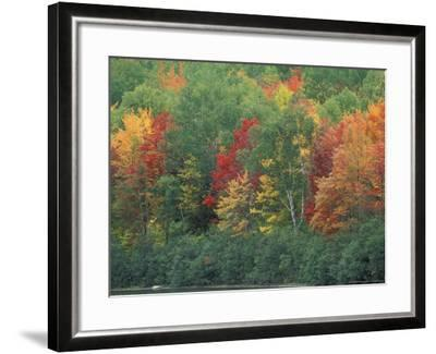 Fall Colors of the Northern Forest, Maine, USA-Jerry & Marcy Monkman-Framed Photographic Print