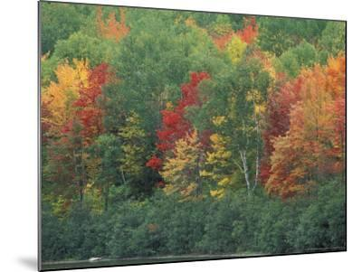 Fall Colors of the Northern Forest, Maine, USA-Jerry & Marcy Monkman-Mounted Photographic Print
