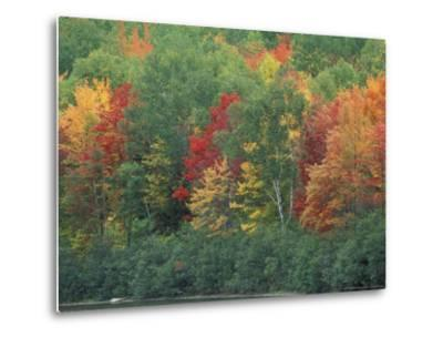 Fall Colors of the Northern Forest, Maine, USA-Jerry & Marcy Monkman-Metal Print