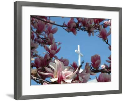 Pink Magnolia Tree And Church Steeple Reading Massachusetts Usa Photographic Print By Lisa S Engelbrecht Artcom