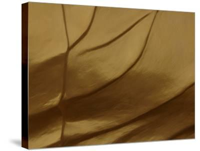 Close-up of Sculpted and Painted Wrinkly Golden Texture--Stretched Canvas Print