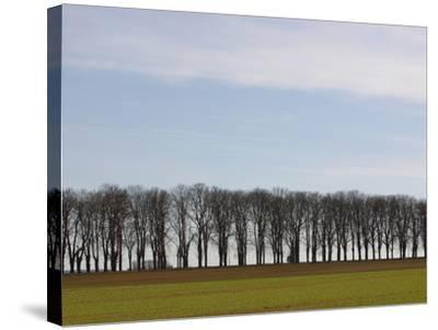 An Expanse of Blue Sky Above a Row of Bare Trees and Green Grass--Stretched Canvas Print