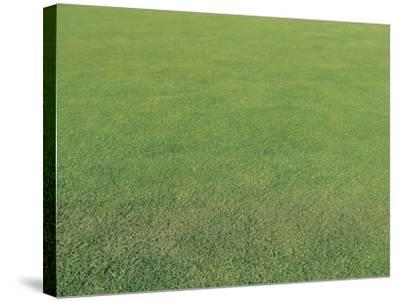 Lush Green Grass--Stretched Canvas Print