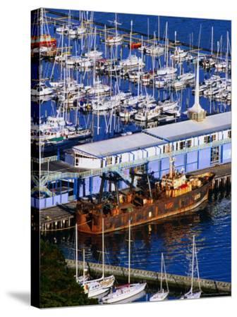 Chaeffers Marina at Oriental Bay, Wellington, Wellington, New Zealand-Paul Kennedy-Stretched Canvas Print