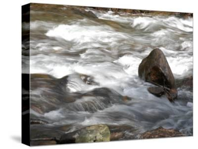 Whitewater Rushes Over Rocks in a River in Montana-Stacy Gold-Stretched Canvas Print