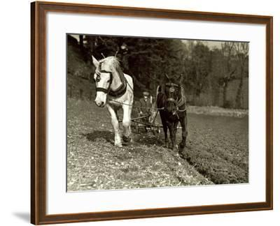 Farmer Ploughing His Field with Horses--Framed Photographic Print