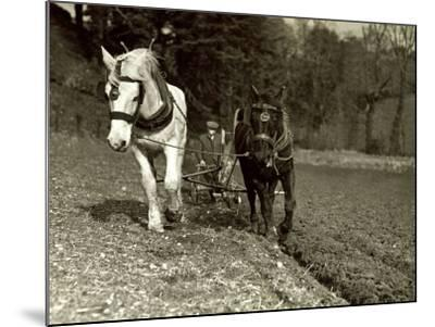 Farmer Ploughing His Field with Horses--Mounted Photographic Print