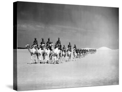 Egyptian Camel Corps--Stretched Canvas Print