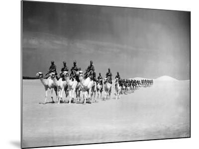 Egyptian Camel Corps--Mounted Photographic Print