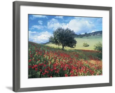 Poppies and Tree, Andalucia, Spain-Peter Adams-Framed Photographic Print