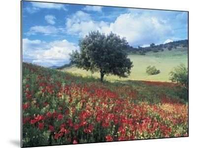 Poppies and Tree, Andalucia, Spain-Peter Adams-Mounted Photographic Print