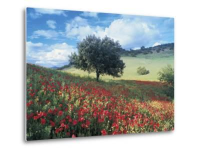 Poppies and Tree, Andalucia, Spain-Peter Adams-Metal Print