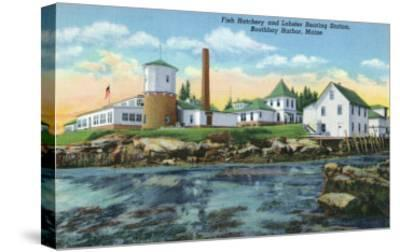 Boothbay Harbor, ME - View of a Fish Hatchery, Lobster Rearing Station-Lantern Press-Stretched Canvas Print