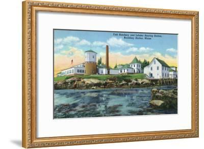 Boothbay Harbor, ME - View of a Fish Hatchery, Lobster Rearing Station-Lantern Press-Framed Art Print