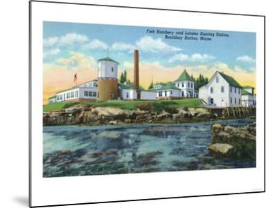Boothbay Harbor, ME - View of a Fish Hatchery, Lobster Rearing Station-Lantern Press-Mounted Art Print