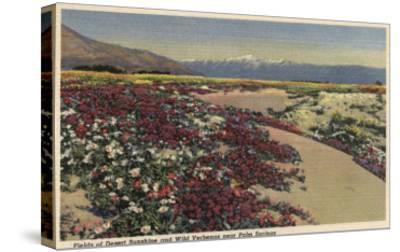 Palm Springs, CA - Fields of Desert Sunshine & Wild Verbenas-Lantern Press-Stretched Canvas Print