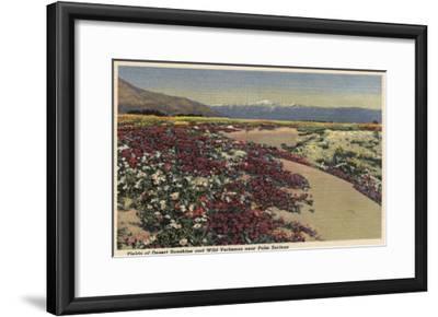 Palm Springs, CA - Fields of Desert Sunshine & Wild Verbenas-Lantern Press-Framed Art Print
