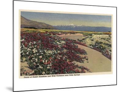 Palm Springs, CA - Fields of Desert Sunshine & Wild Verbenas-Lantern Press-Mounted Art Print