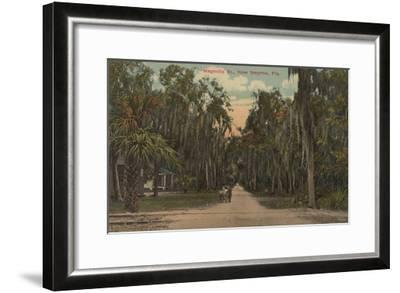 New Smyrna, Florida - View of Magnolia St. with Trees-Lantern Press-Framed Art Print