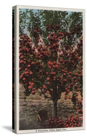 Wenatchee, WA - A Wenatchee Valley Apple Tree-Lantern Press-Stretched Canvas Print
