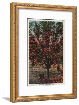 Wenatchee, WA - A Wenatchee Valley Apple Tree-Lantern Press-Framed Art Print