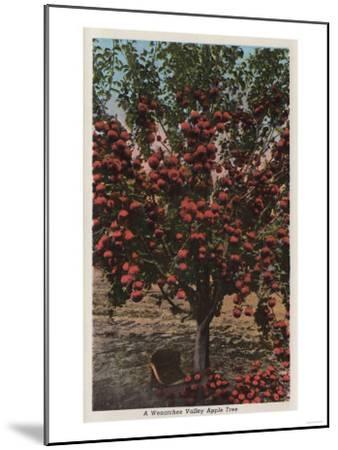 Wenatchee, WA - A Wenatchee Valley Apple Tree-Lantern Press-Mounted Art Print