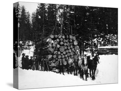 Logs being hauled on a Sleigh by a Team of Horses Photograph - Alaska-Lantern Press-Stretched Canvas Print