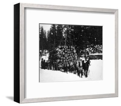 Logs being hauled on a Sleigh by a Team of Horses Photograph - Alaska-Lantern Press-Framed Art Print