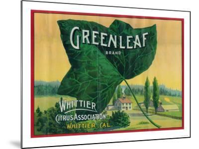 Greenleaf Lemon Label - Whittier, CA-Lantern Press-Mounted Art Print