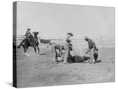 Cowboys Branding a Calf Photograph - South Dakota-Lantern Press-Stretched Canvas Print