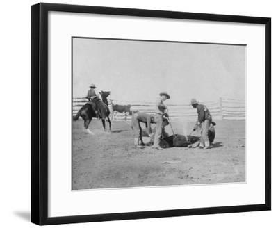 Cowboys Branding a Calf Photograph - South Dakota-Lantern Press-Framed Art Print