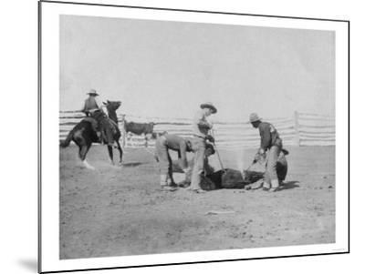 Cowboys Branding a Calf Photograph - South Dakota-Lantern Press-Mounted Art Print