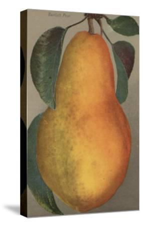 Fruit Chromo Lithograph of Bartlett Pear Fruit - California State-Lantern Press-Stretched Canvas Print