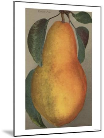Fruit Chromo Lithograph of Bartlett Pear Fruit - California State-Lantern Press-Mounted Art Print