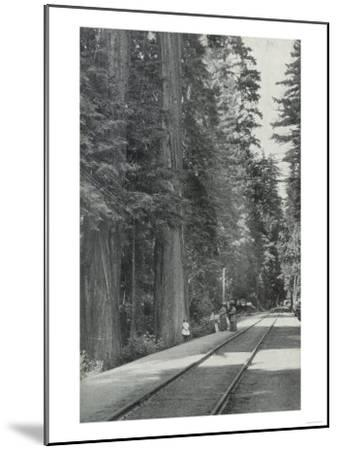 View of Big Tree Grove Park - Santa Cruz, CA-Lantern Press-Mounted Art Print