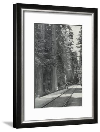 View of Big Tree Grove Park - Santa Cruz, CA-Lantern Press-Framed Art Print