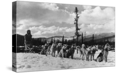 Siberian Sled Dogs Taking a rest in Alaska Photograph - Alaska-Lantern Press-Stretched Canvas Print