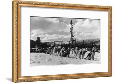Siberian Sled Dogs Taking a rest in Alaska Photograph - Alaska-Lantern Press-Framed Art Print