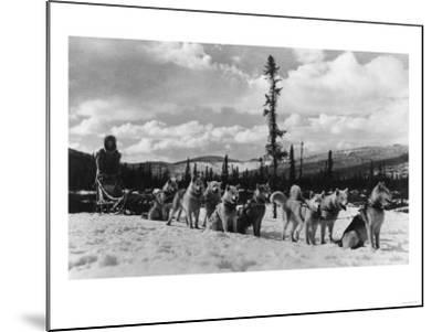 Siberian Sled Dogs Taking a rest in Alaska Photograph - Alaska-Lantern Press-Mounted Art Print