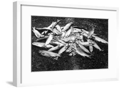 Rogue River Valley, Oregon catch of Trout Photograph - Rogue River, OR-Lantern Press-Framed Art Print