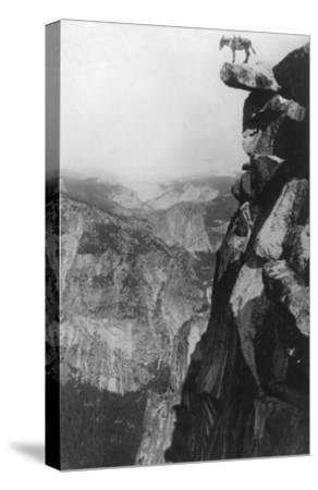 Winkey the Donkey at Glacier Point - Yosemite National Park, CA-Lantern Press-Stretched Canvas Print
