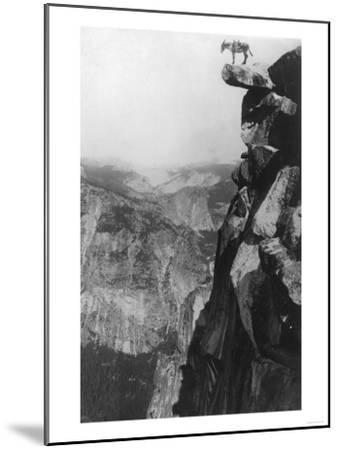 Winkey the Donkey at Glacier Point - Yosemite National Park, CA-Lantern Press-Mounted Art Print
