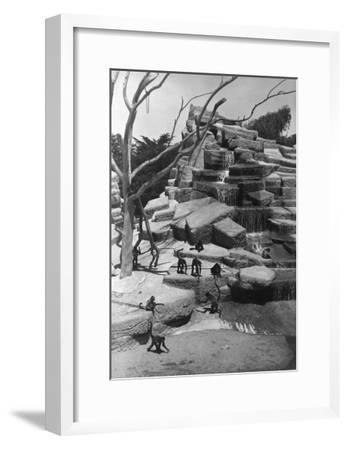 View of Monkey Island at the Zoo - San Francisco, CA-Lantern Press-Framed Art Print