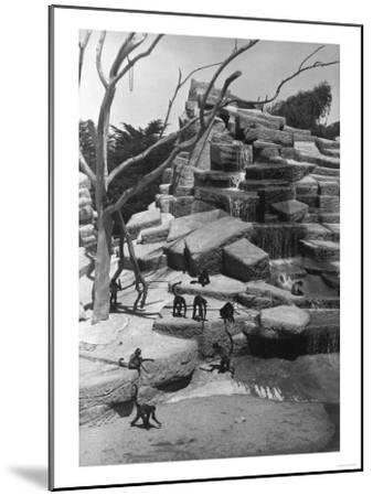 View of Monkey Island at the Zoo - San Francisco, CA-Lantern Press-Mounted Art Print