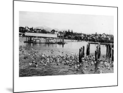 View of the Docks and Harbor - Petersburg, AK-Lantern Press-Mounted Art Print