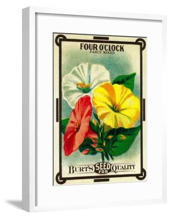 Four O'Clock Seed Packet-Lantern Press-Framed Art Print
