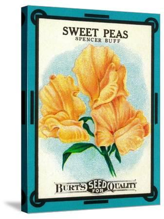 Sweet Peas Seed Packet-Lantern Press-Stretched Canvas Print