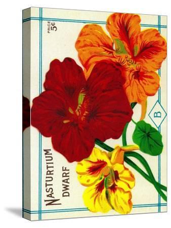 Nasturtium Seed Packet-Lantern Press-Stretched Canvas Print