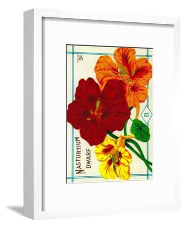 Nasturtium Seed Packet-Lantern Press-Framed Art Print