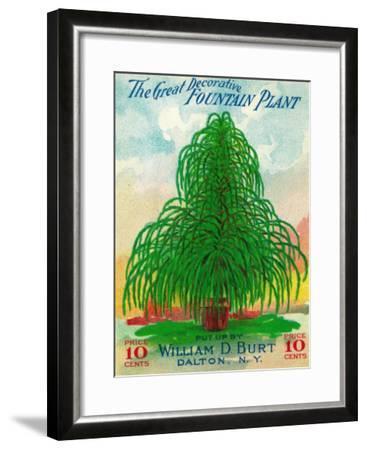 Fountain Plant Seed Packet-Lantern Press-Framed Art Print